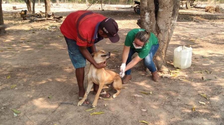 Prefeitura intensifica vacinação antirrábica na zona rural de Rosário Oeste